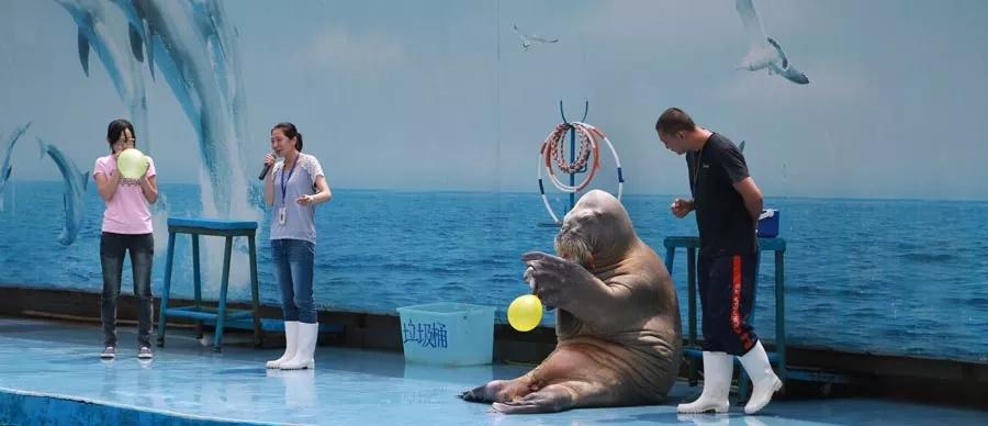 新澳海底世界 海豚表演馆