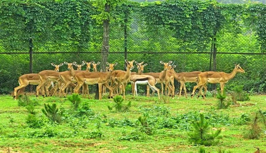 秦皇岛野生动物园交通